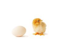 Cute Newborn Chicken And Egg