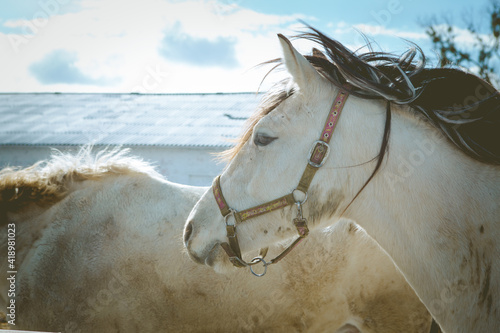 Photo beautiful horse in the pasture