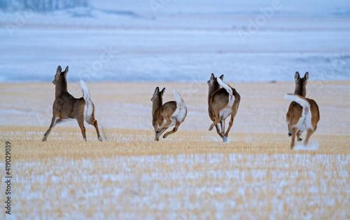 Slika na platnu Deer in Prairies