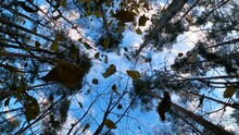 Leaves Fall From Understory Bush Slow Motion Shot Camera Look Up