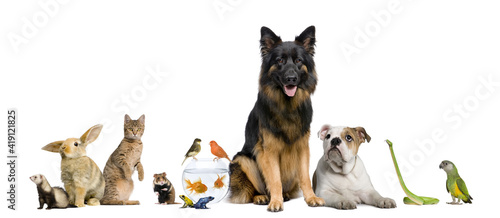 group of dogs on white background Fototapet