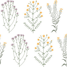 Floral Vector Seamless Pattern With Meadow Wild Flowers, Plants And Herbs. Hand Drawn Illustration Isolated On White Background. For Wrapping, Fabric, Wallpaper.