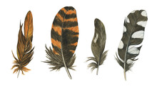 Set Of Feathers Wodpecker And Woodcock Isolated On White Background. Spotted And Striped, Black And Orange Feather. Realistic Painting. Boho Style.