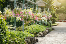 Nursery Garden With Many Blooming Flowers In Hanging Pots