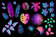 Neon Tropical Leaves Of Palm Trees, Monstera, Fern And Other Plants. Vector Color Sketch On A Black Background. Ultraviolet Pink, Blue, Turquoise.