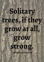 Solitary Trees, If They Grow At All, Grow Stronger Quote By Winston Churchill Over Tree Bark