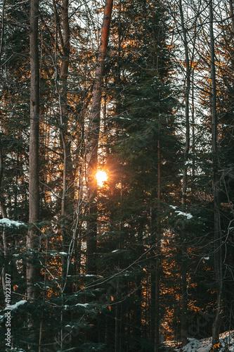 Obraz Zachód słońca , las, światło - fototapety do salonu