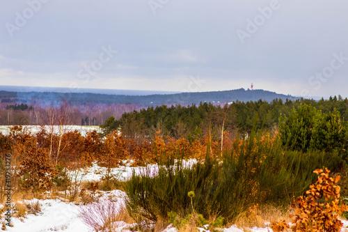 Fototapeta premium Zima pejzaż leśny