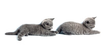 Two Adorable Gray Kittens Isolated On White