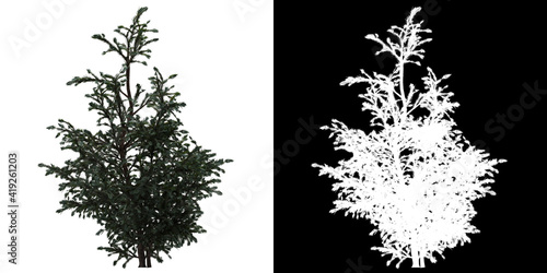 Fotografiet Front view of tree (Boulevard Cypress) png with alpha channel to cutout 3D rende