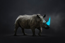 Rhinoceros With Blue Tusk Vulnerable To Poaching