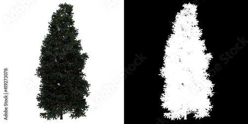 Left view of tree (Boulevard Cypress) png with alpha channel to cutout 3D render Fototapet