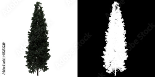Valokuva Left view of tree (Boulevard Cypress) png with alpha channel to cutout 3D render