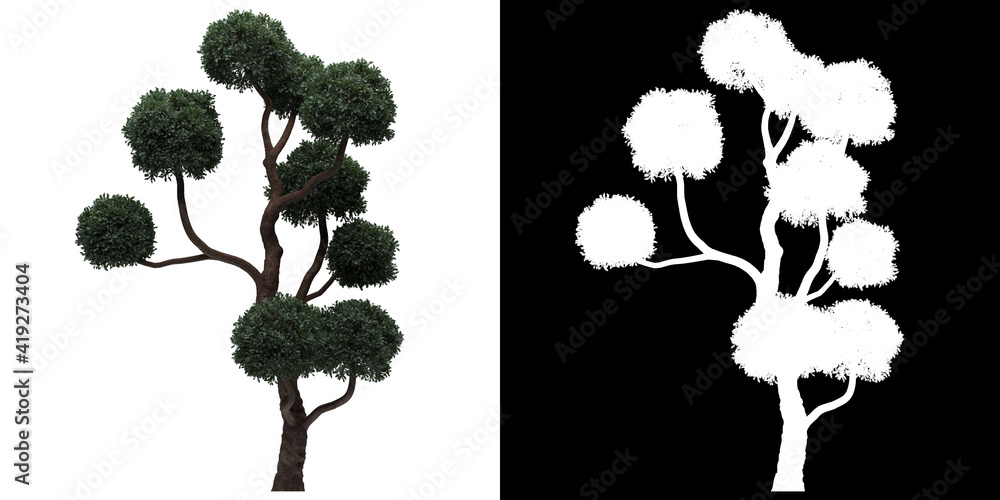Fotografie, Obraz Front view of tree (Boulevard Cypress) png with alpha channel to cutout 3D rende