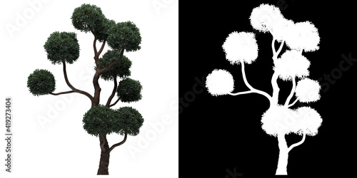 Canvas Front view of tree (Boulevard Cypress) png with alpha channel to cutout 3D rende