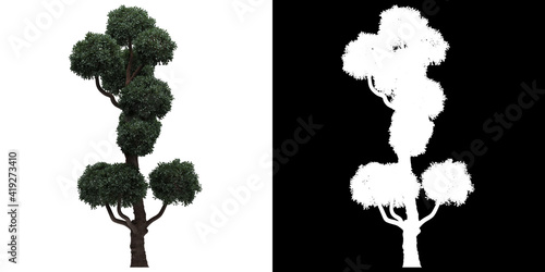 Left view of tree (Boulevard Cypress) png with alpha channel to cutout 3D render Fototapete