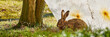 canvas print picture - hase ostern