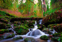 View Of Trillium Falls, Redwoods National And State Parks, California