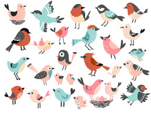 Cute Bird Set, Funny Little Bird Family, Hand Drawn Vector Illustration