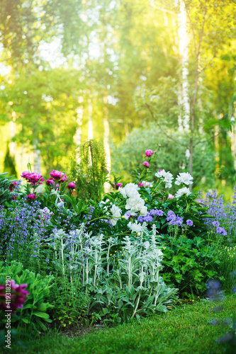 Canvas beautiful english style cottage garden view in summer with blooming peonies and companions - stachys, catnip, heranium, iris sibirica