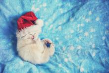 Little White Kitten In Santa Claus Hat Lying On A Blue Soft Blanket