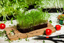 Micro Greens Are Young Vegetable Greens That Fall Somewhere Between Sprouts And Baby Leaf Vegetables. Micro Greens May Be Eaten Raw
