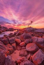 Beautiful ,autumn, Sunrise, Over The Lone Tree At Binalong Bay. Bay Of Fires Conservation Area. North Eastern Tasmania, Australia.
