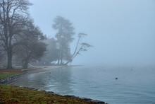 Majestic View Of Bare Leafless Trees Along A Coastline With A Calm Seascape Shrouded In Fog