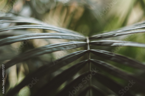 Macro photo of green leaves, blurred, selective focus. Tapéta, Fotótapéta