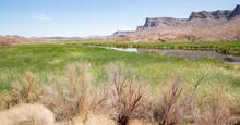 Bill Williams River National Wildlife Refuge, Oasis In The Mojave Desert, Arizona, USA