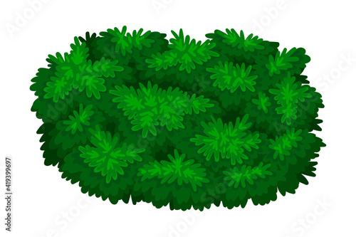 Wallpaper Mural Dark Green Bush as Perennial Woody Plant with Dense Foliage Cover Vector Illustr