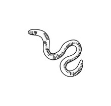 Earthworms Vector Illustration Isolated On White