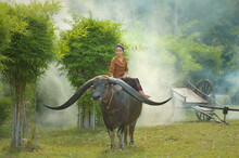 Woman Sitting On A Water Buffalo In A Field, Thailand