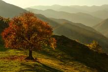 Autumn Tree In Mountain Landscape, Bulgaria