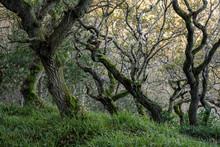 Gnarled Winter Trees On Yorkshire Coast 8511