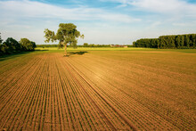 The Lone Tree In The Field..Drone Photography