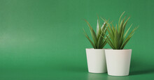 Two Artificial Cactus Or Plastic Plants Or Fake Tree On Green Background.no People