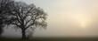 canvas print picture - Kahle Eiche im Nebel, Baumbestattungen, Waldfriedhof