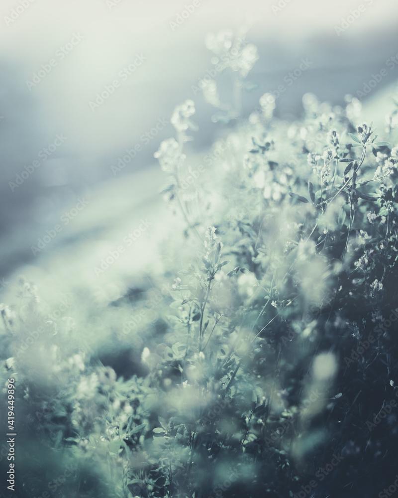 Fototapeta Kwiaty polne Field flowers - obraz na płótnie