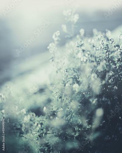 Fototapeta Kwiaty polne Field flowers obraz na płótnie