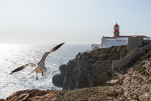 Seagull Flight Over Cliff Near Lighthouse In Cape Saint Vincent In Sagres, Portugal