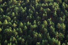 Drone View Of Verdant Trees Peaks Growing In Thick Lush Woodland On Sunny Summer Day