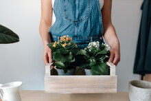 Cropped Unrecognizable Female Gardener In Denim Overalls With Potted Plants With Blooming Flowers In Wooden Box