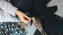 From Above Of Crop Unrecognizable Female Owner In Casual Clothes Feeding Cute Weiro Bird With Sunflower Seeds While Resting On Comfortable Couch With Laptop