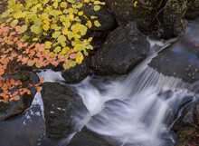 From Above Long Exposure Of Shallow Rapid Brook Flowing Through Stony Ground Near Tree With Yellow Leaves On Autumn Day