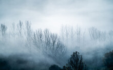 Mystical Landscape Of Leafless Trees Growing In Forest Against Gray Foggy Sky In Evening