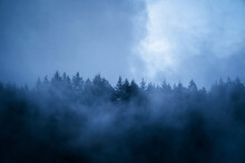 Scenic View Of Woods With Coniferous Trees Growing Under Cloudy Sky In Foggy Weather In Twilight