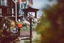 Small Omnivorous Bird With Ornamental Plumage Sitting Near Wooden Feeder Against Residential Houses In Summer