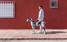 Side View Of Male Owner Standing With Big Harlequin Great Dane Dog During Stroll In City And Looking Away