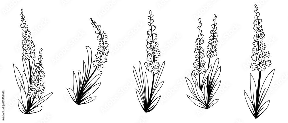 Fototapeta Set of Floral Elements